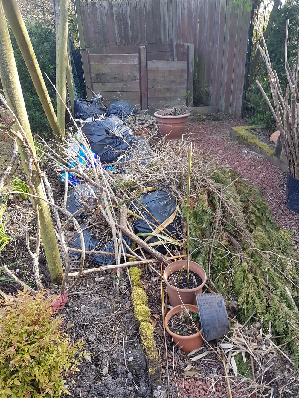 Garden Waste Clearance - Before